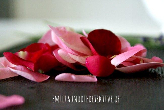 Rosenbluetenblaetter