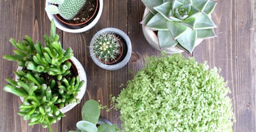 Kaktus Love & die Urban Jungle Blogger