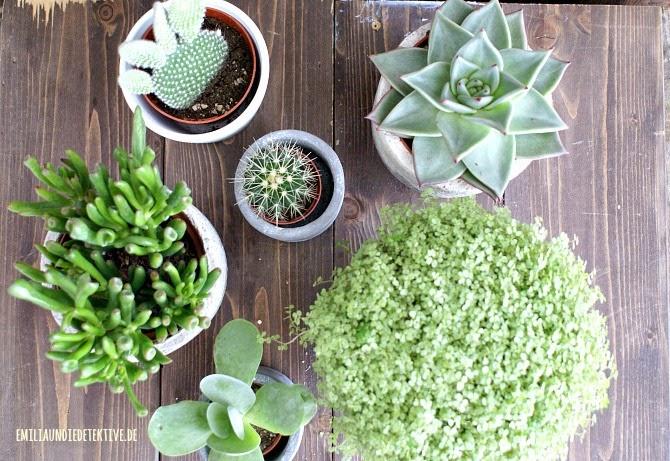 Kaktus Familie