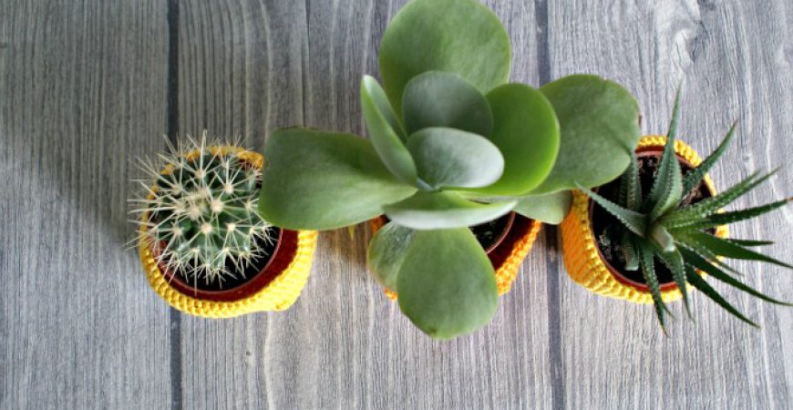 "Eingehäkelt –  ""Creative plant pots – how to dress up your plants"""