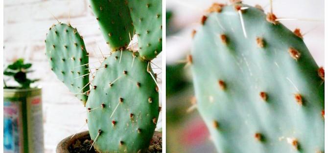 Kaktus mit Filter