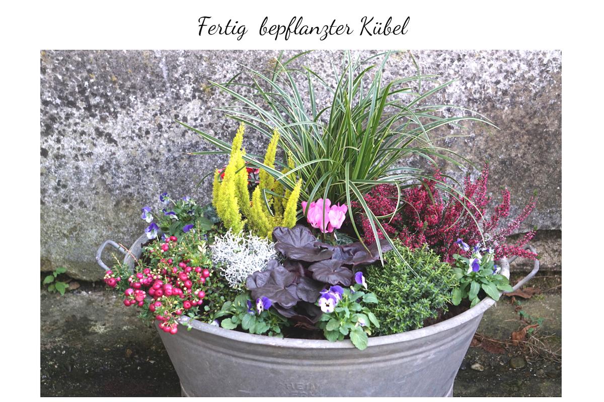 Blumenkübel für den Herbst - Kübelpflanzen